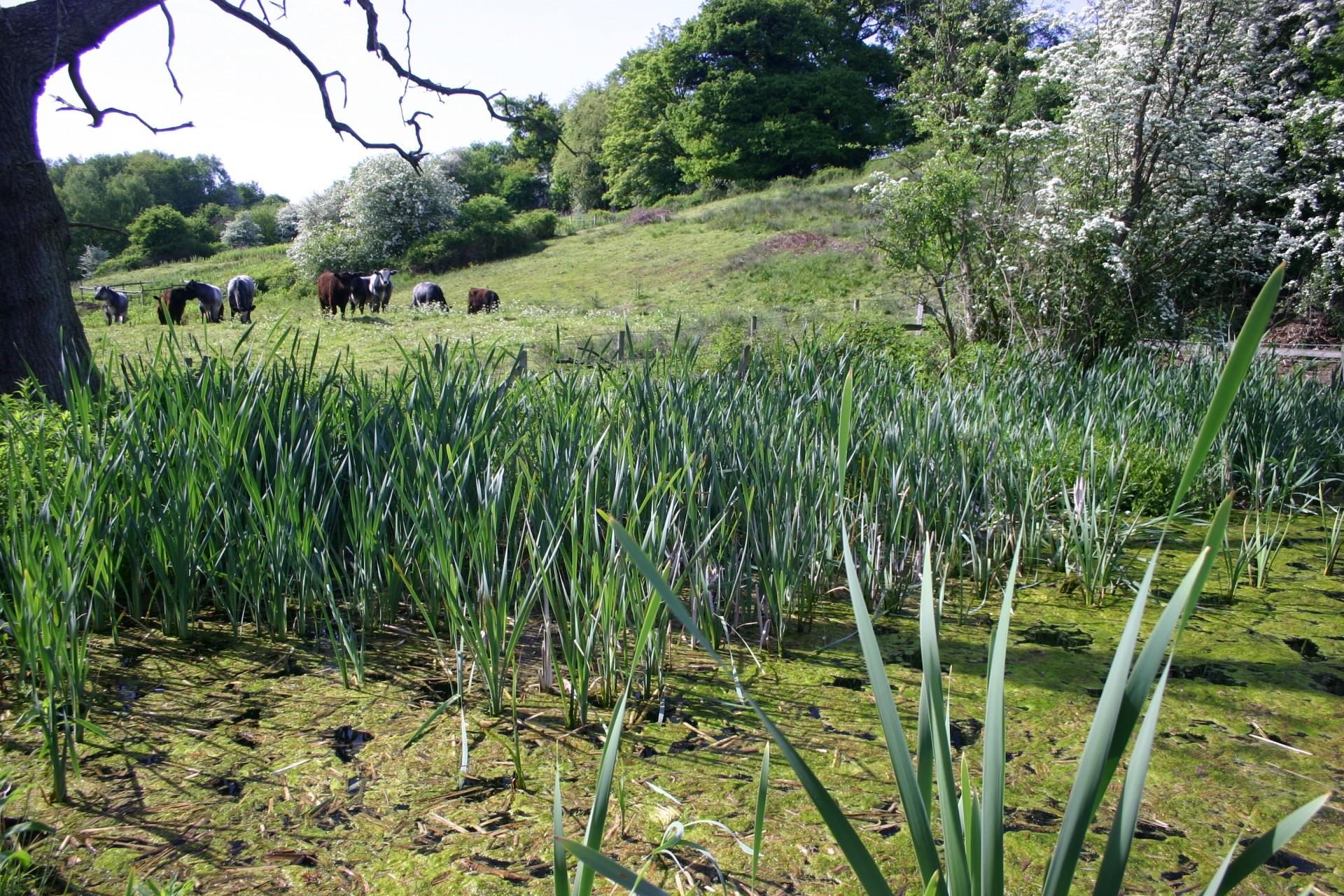 Swettenham Meadows, Cheshire, image credit Paul Clarke